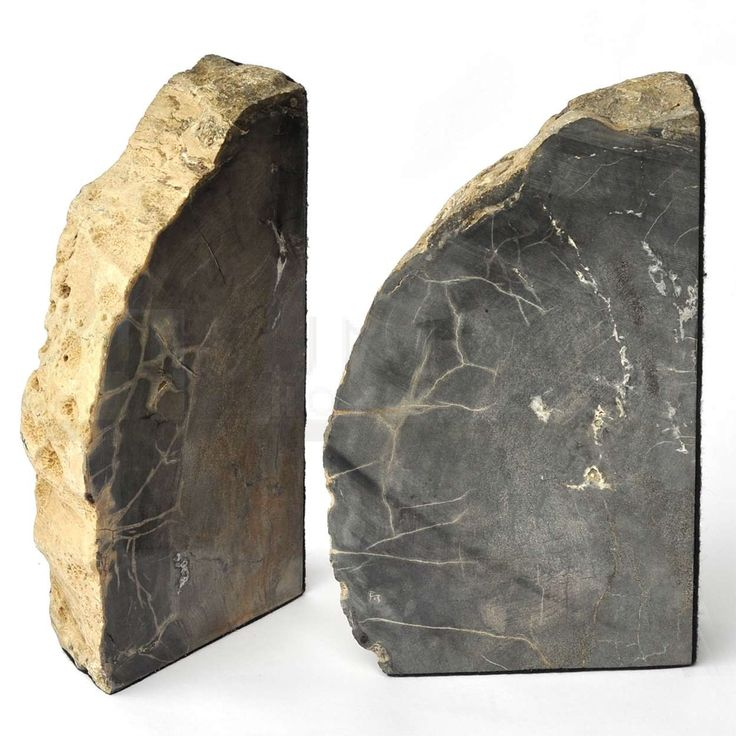 Sunland Home Decor: 9-inch Polished Petrified Wood Bookends
