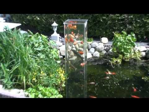 76 Best Images About Koi Pond On Pinterest Raised Pond Backyard Ponds And Waterfalls