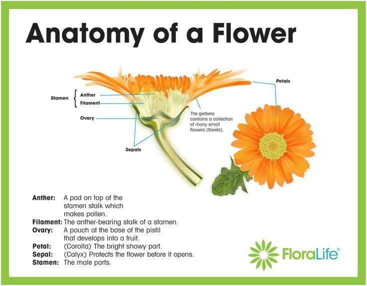 Image Of Latest Plant Parts Flower Diagram To Label Parts Of A Plant Parts Of A Flower Diagram Of A Flower