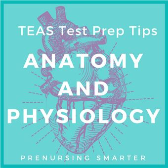 Anatomy and Physiology is the largest section of the TEAS. Check out the free TEAS flashcards and online courses for test prep tips.
