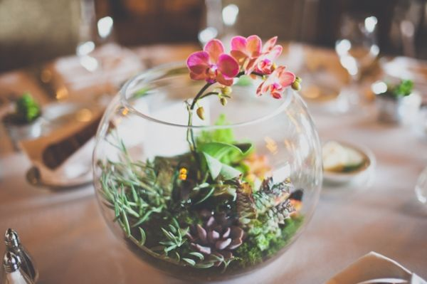 Best images about terrariums and moss on pinterest
