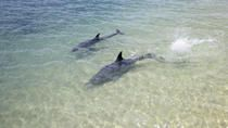3-Day Monkey Mia Dolphins, Pinnacles Desert and Kalbarri National Park Tour from Perth, Perth