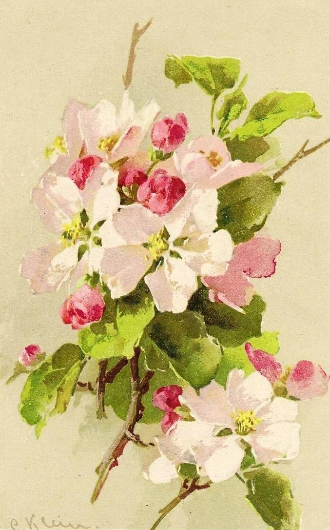 Catherine Klein: Apple Blossoms
