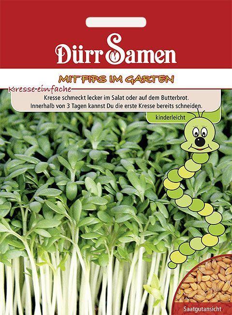 Dürr Samen Kindersorten  Kresse einfache