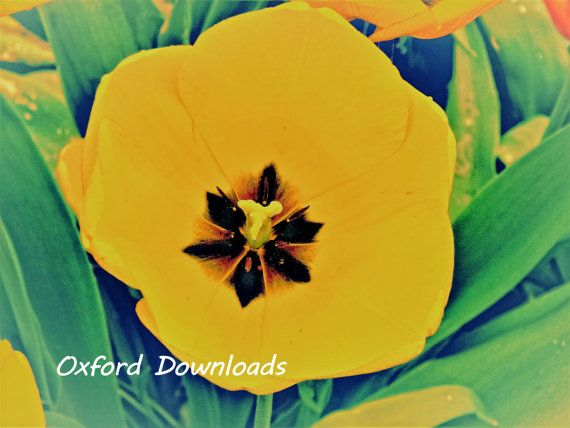 Tulip Art Print Floral Print Printable by OxfordDownloads on Etsy