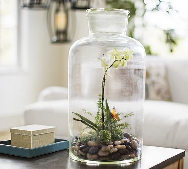 Tabletop Jar Terrarium