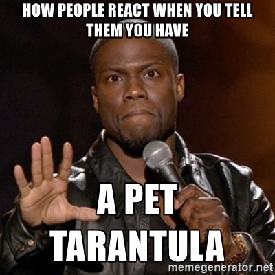 Kevin Hart - How people react when you tell them you have a pet tarantula