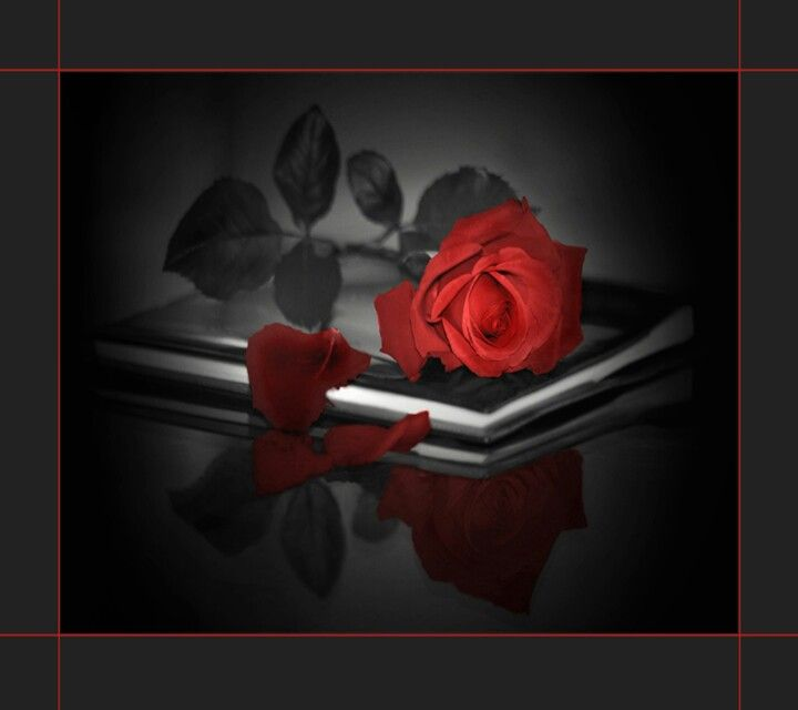 Red Rose Love FlowerRose FlowersBlack