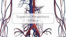 Superior Mesenteric Artery - Anatomy Tutorial