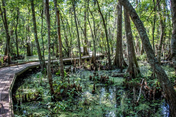 Jean Lafitte National Park, New Orleans Self-Guided Swamp Tour Travel Blog Post