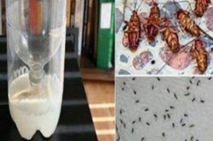 Testado, aprovado e recomendado! É o fim definitivo das baratas e formigas em casa! – Dicas de Tudo