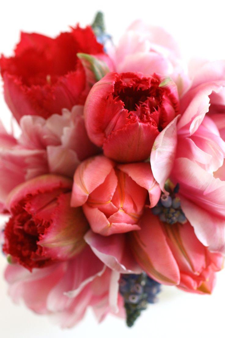 tulip ❤❤❤
