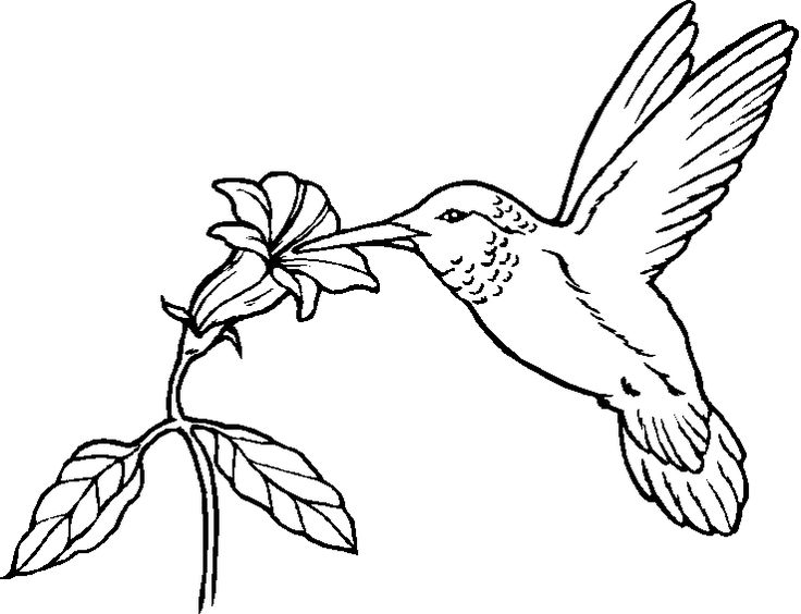 coloring pages with birds | Printable Bird Coloring Pages - Songbirds and More
