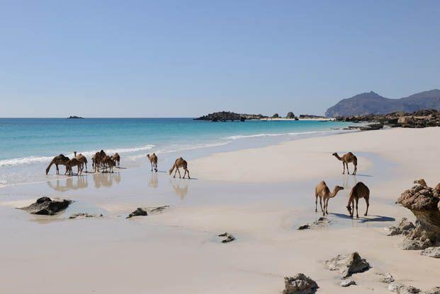Randonnée Oman en famille : Nizwa, Mascate, désert de Wahiba, tortues - La Balaguère