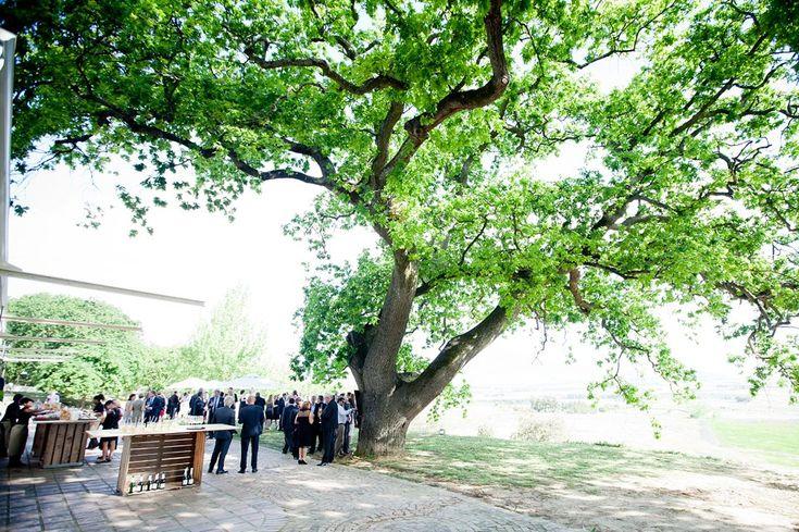 Nadia and Henrik's wedding - Diamant Estate - Cape Town wedding photographer - Monica Dart