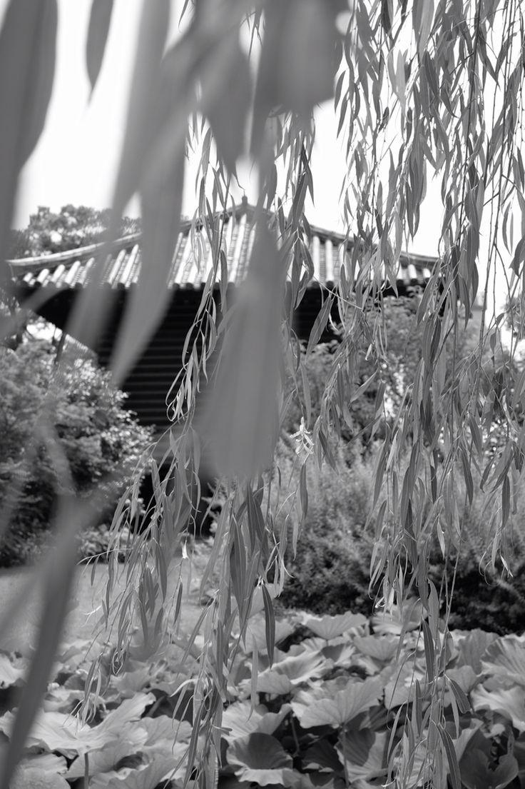 東寺、心地よい風