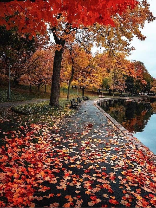 Updated Hairstyles Trends Beauty Fashion Ideas In 2020 Autumn Landscape Autumn Scenery Autumn Photography