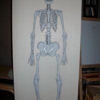 Les os du squelette : Construire un squelette d'1m de haut