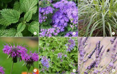 499 Best Erbe Spezie E Aromi Images On Pinterest Botany