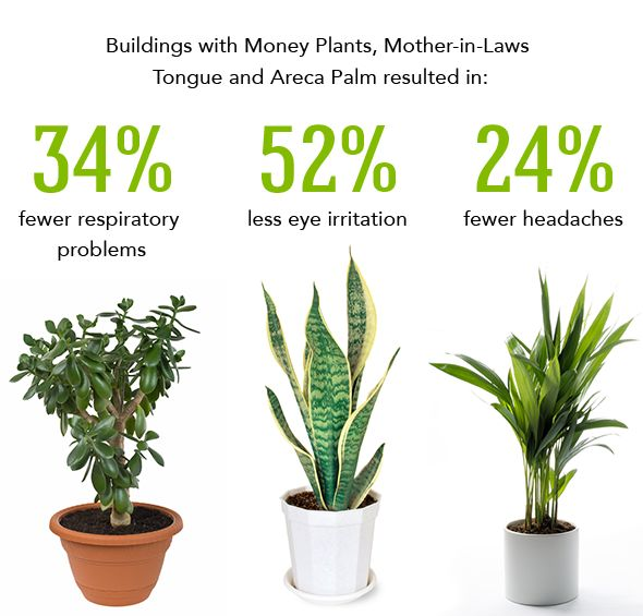 Best Plants To Clean The Air Homie Pinterest Indoor And