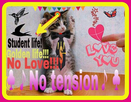 Student Life Is Golden Life No Love No Tension Education