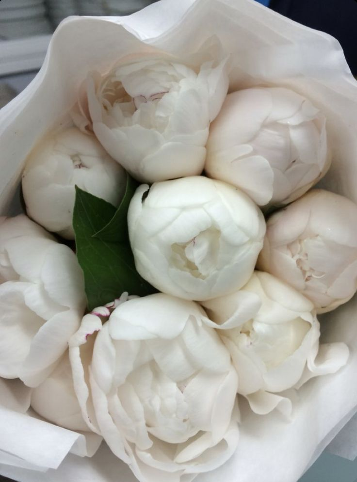 Fresh Flowers, White Flowers, Beautiful Flowers, Exotic Flowers, Yellow Roses, Piones Flowers, Pink Roses, White Tulips, White Roses