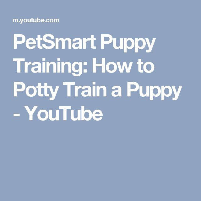 PetSmart Puppy Training: How to Potty Train a Puppy - YouTube