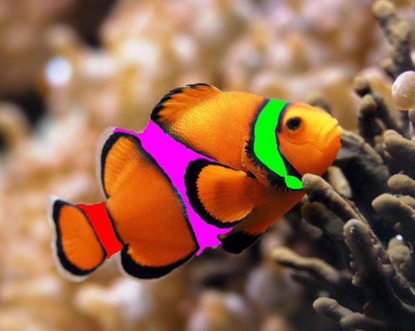 109 Best Animals Images On Pinterest: 109 Best Ocean Fish Images On Pinterest
