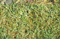 How to properly treat your lawn with moss - no thanks to HOA :(: Treats Kil Moss, Thumb Green, Gardens Yard, Black Thumb, Homeopath Recipes, Proper Treats, Removal Moss, Help Hints, Gardens Growing