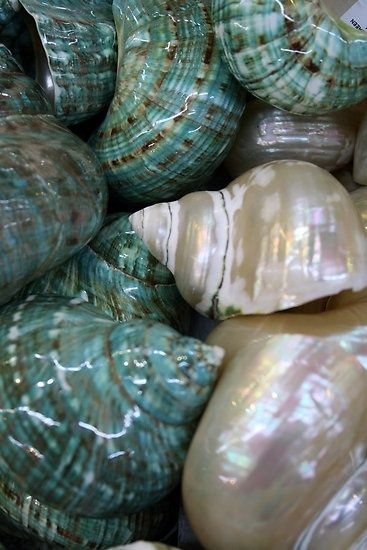 I love white, mother-of-pearl seashells!