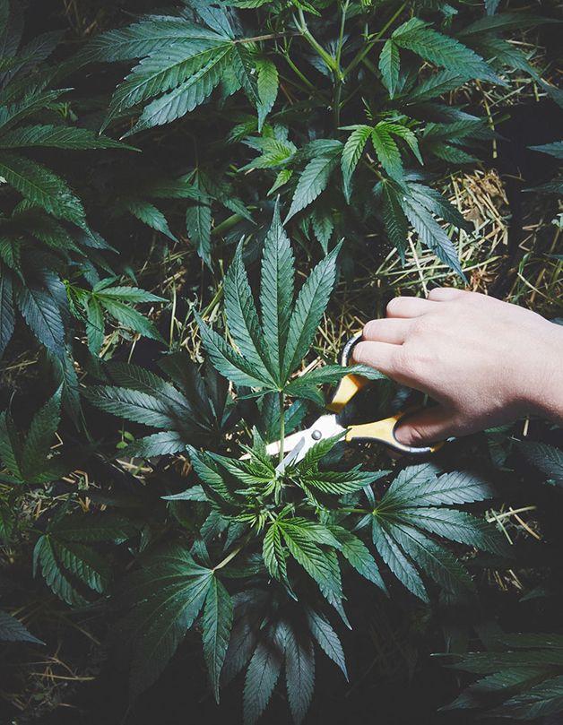 NunsMarijuana4