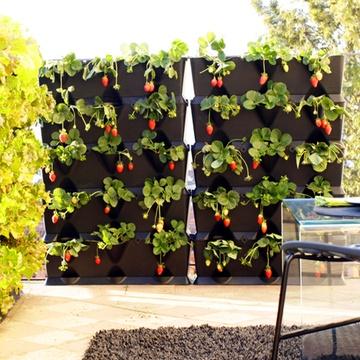 mini garden in the house..oooh
