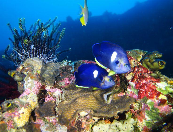 Ayvalık dalış okulu - ida dalış merkezi #scuba #scubadiving #diving #underwater #dalisnoktam #daliskursu #ayvalikdalis #dalisokulu #underwaterphotography #divepix www.idadiving.com