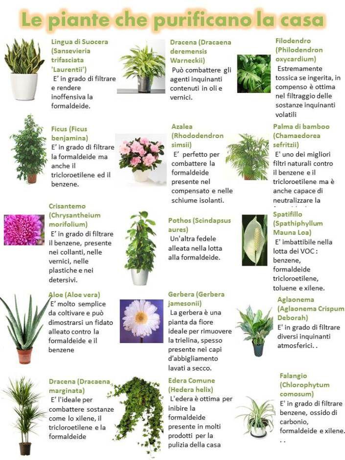 Oltre 25 fantastiche idee su piante da appartamento su - Aria secca in casa ...