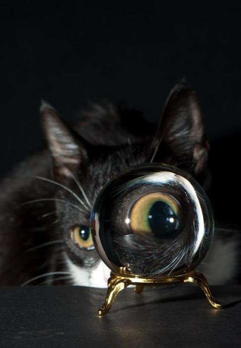 Eye: Funny Kitty, Funny Things, Cat Eye, De Animaisvol, Animaisvol 147, Funny Animal, Big Eye, Crystals Ball, Black Cat