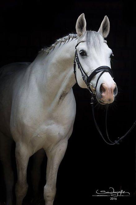 Mensch- und Pferdefotografie aus Mönchengladbach/NRW. Kreative Fotografie mit Herz, Fantasie und dem Blick für das Wesentliche. Jeder kann ein Model sein!