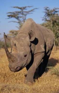 Fotos de Rinocerontes