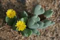 flor salvador floricultura 0100