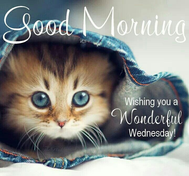 Image result for have a good wednesday cats
