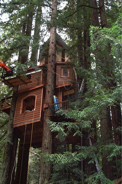 433 best cool tree houses images on pinterest tree for Small tree house