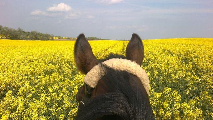 #spring#horse#bluesky