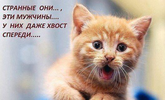 кирилл лукяш (@kirilllu20121) | Твиттер