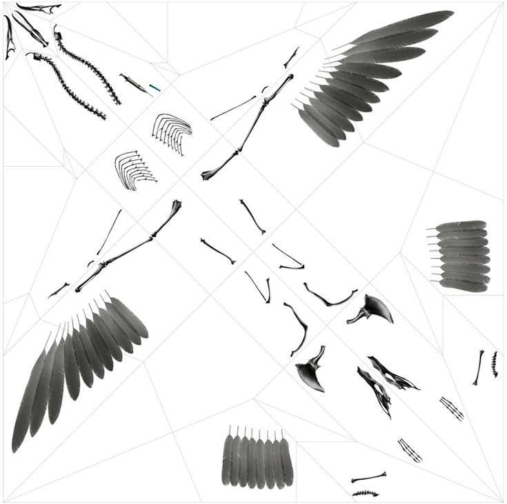 takayuki hori: oritsunagumono // diagram of the printed components #xray #plastic #unfold #diagramArtists Prints, Concept Design, Endangered Animal, Endangered Sea, Paper Folding, Origami, X Ray, Animal Skeletons, Takayuki Horie