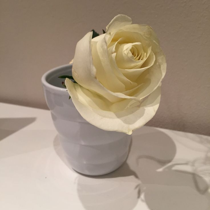Amo le rose