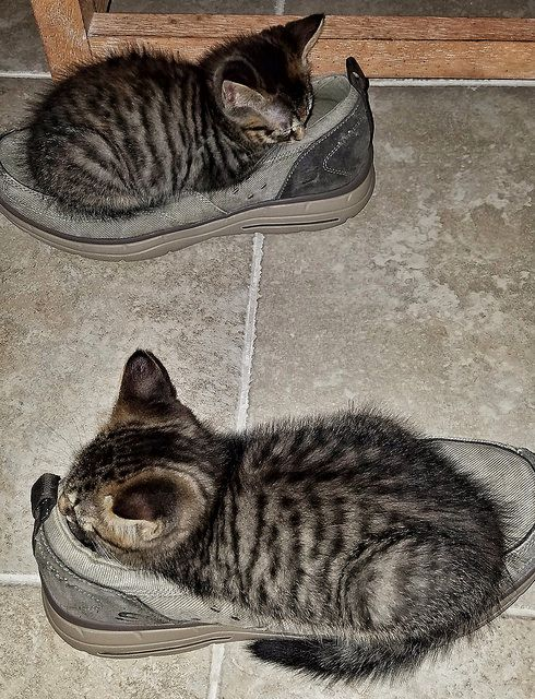cats.........💙💖💛💙💖💛