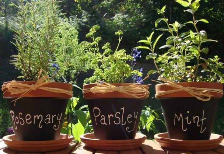 jardin aromatique au balcon: romarin, persil frisé et menthe en pots