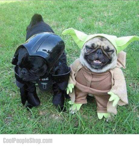 Twitter / CoolPeopleShop: Star Wars Pug Style #humor ...