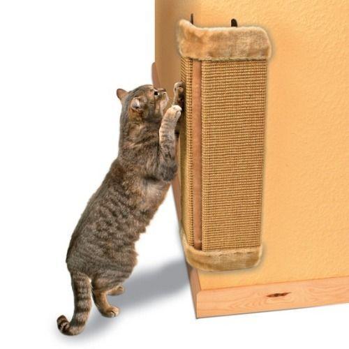 Życie z drapieżnikiem « Kocham Koty