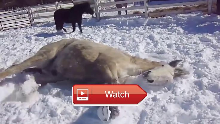 😸 FUNNY HORSES Funny Horse Videos HD Funny Pets 😼 THIS VIDEO HAS A NEWER VERSION click here Subscribe Submit your video Business…