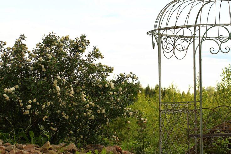 Ruusunmekko: Yöttömän yön tuoksu